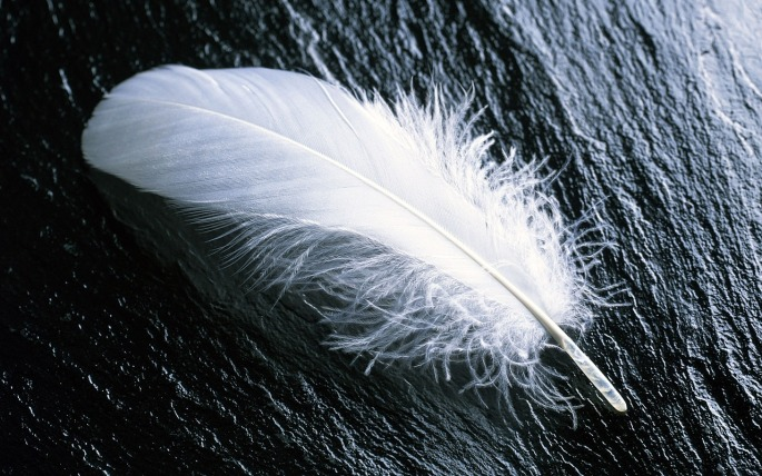 feather-967367_1280